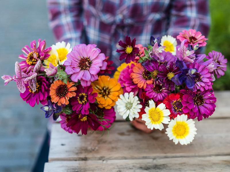 Blumen zum selber pflücken